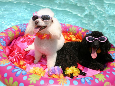 Water Safety and The Dog Days of Summer